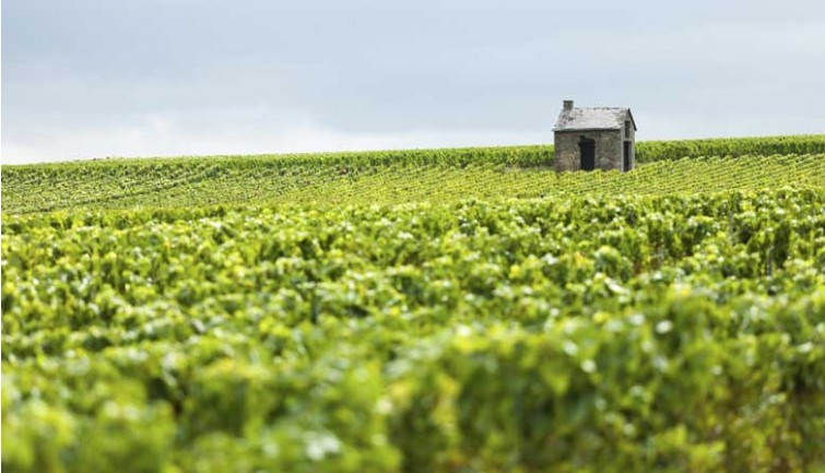 Guided Tour of the Reims Champagne Region   by Coach with